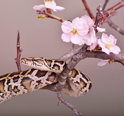 Kosmetik mit Schlangengift